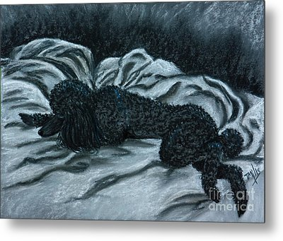 Sleeping Poodle Metal Print