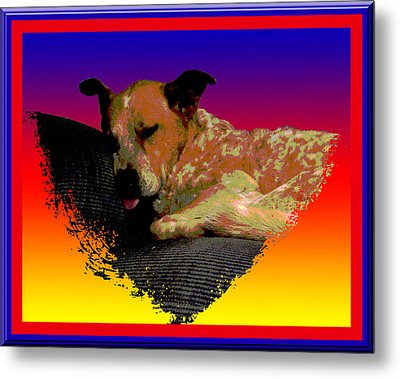 Sleeping Soundly Metal Print by One Rude Dawg Orcutt