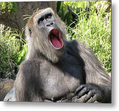 Sleepy Gorilla Metal Print