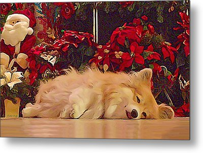 Metal Print featuring the photograph Sleepy Holiday Corgi Surrounded By Poinsettias. by Kathy Kelly