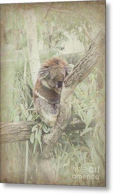 Sleepy Koala Metal Print by Elaine Teague