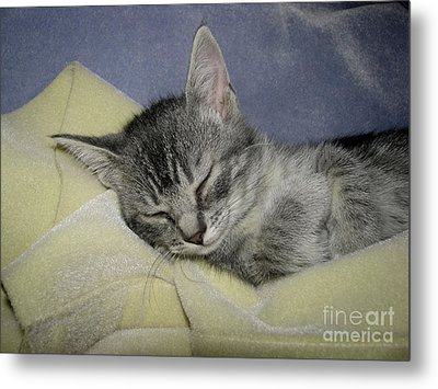 Sleepy Time Metal Print
