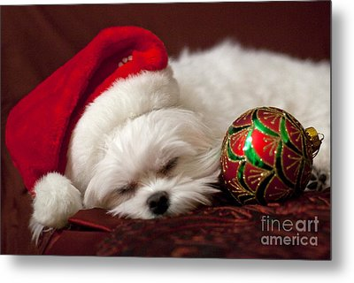 Sleepy Time Metal Print by Leslie Leda