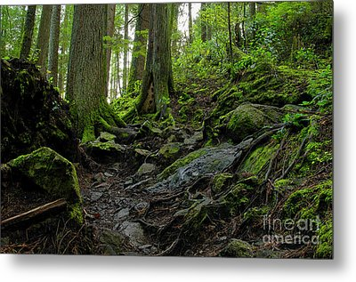 Metal Print featuring the photograph Slippery When Wet by Sharon Talson
