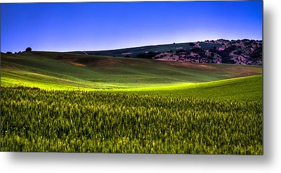 Sliver Of Sunlight On The Palouse Hills Metal Print by David Patterson