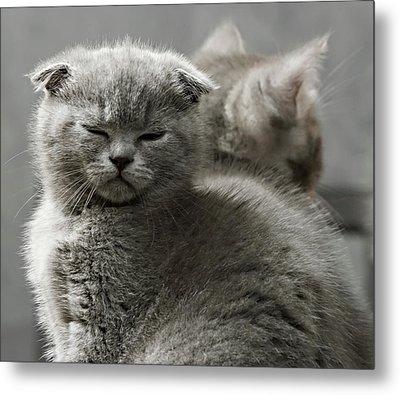 Slumbering Cat Metal Print
