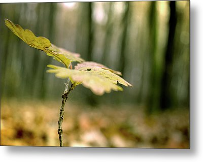 Small Branch With Yellow Leafs Close-up Metal Print