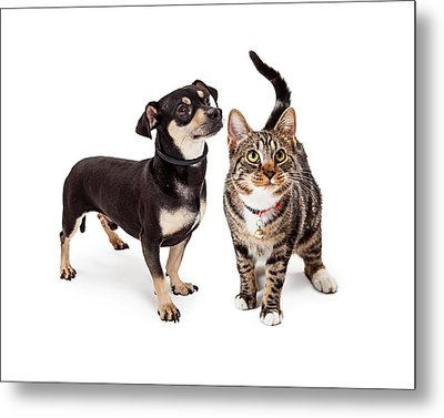 Small Dog And Cat Looking Up Together Metal Print by Susan Schmitz