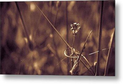 Metal Print featuring the photograph Small by Lora Lee Chapman