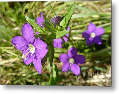 Metal Print featuring the photograph Small Mauve Flowers by Jean Bernard Roussilhe