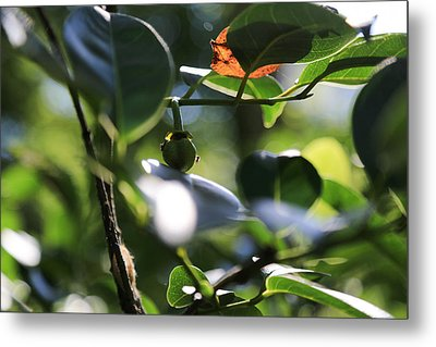 Small Nature's Beauty Metal Print by Christopher L Thomley