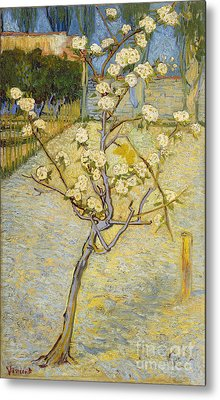 Small Pear Tree In Blossom Metal Print by Van Gogh