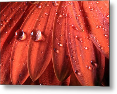 Small Water Drops Metal Print by Angela Murdock