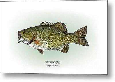 Smallmouth Bass Metal Print by Ralph Martens
