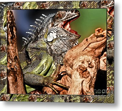Smiling Adult Iguana  Metal Print by Carol F Austin