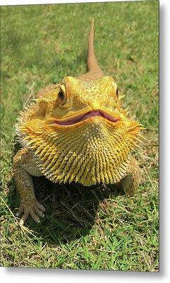 Smiling Bearded Dragon  Metal Print by Susan Leggett