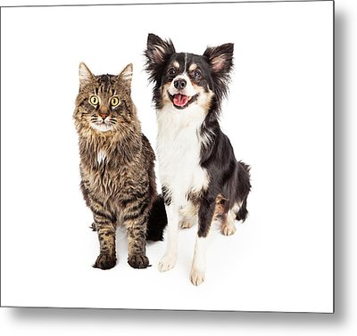 Smiling Chihuahua Mixed Breed Dog And Cat Together Metal Print