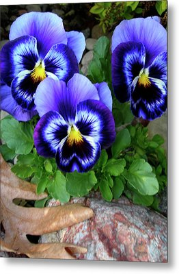Smiling Faces Of Spring Metal Print