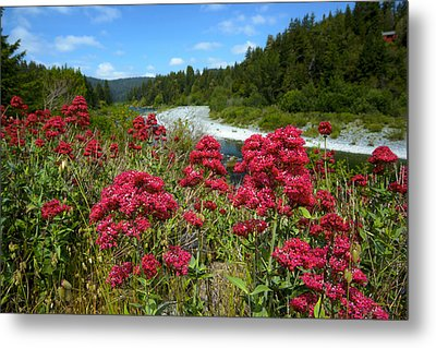 Smith River Overlook In Jedediah Smith Sp Metal Print by Joe Doherty