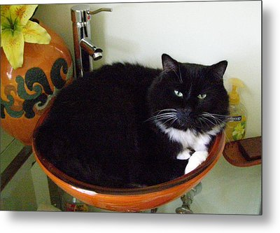 Metal Print featuring the photograph Smokey In Wash Bowl by Jeanette Oberholtzer