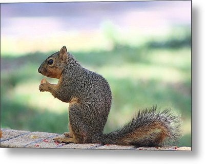 Snack Time Metal Print by Colleen Cornelius