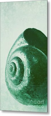 Snail Shell Metal Print by Angela Doelling AD DESIGN Photo and PhotoArt