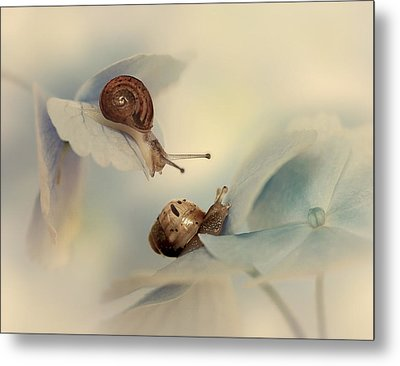 Snails Metal Print by Ellen Van Deelen