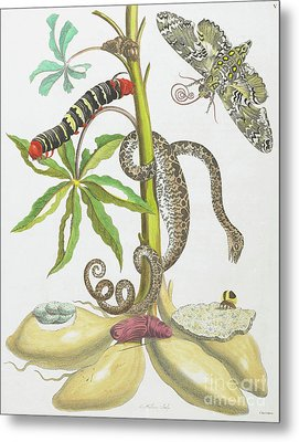 Snake, Caterpillar, Butterfly, And Insects On Plant Metal Print