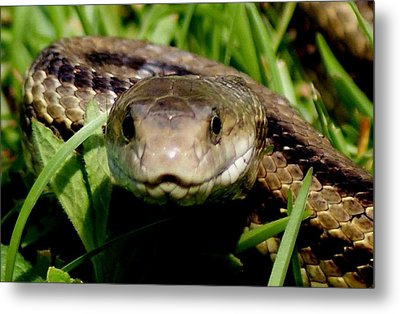 Snake Face Metal Print by Bruce W Krucke
