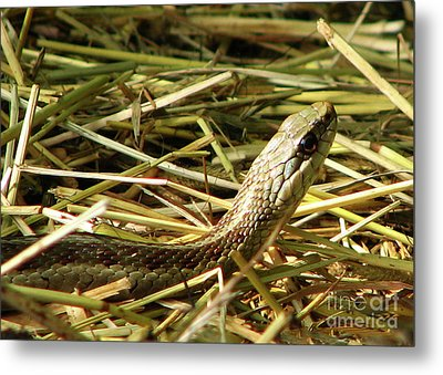 Metal Print featuring the photograph Snake In The Grass by Deborah Johnson