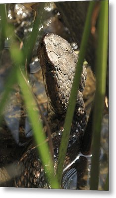 Snake In The Water Metal Print