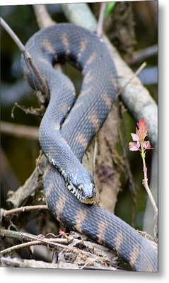 Snakes In The Trees Metal Print