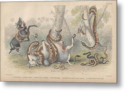 Snakes Metal Print by Rob Dreyer
