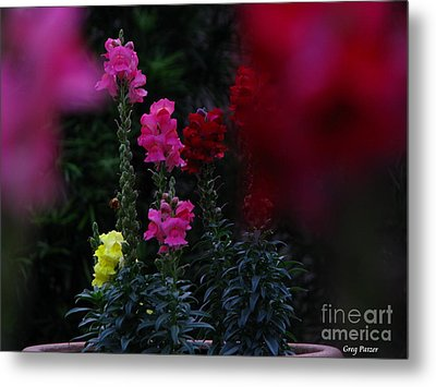 Snapdragon Metal Print by Greg Patzer