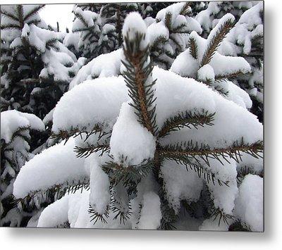 Snow Barren Metal Print