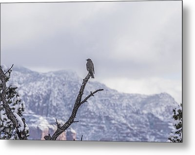 Snow Bird Metal Print by Laura Pratt