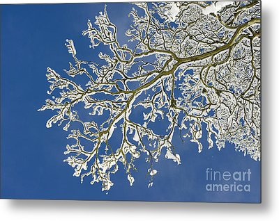 Snow Branch Metal Print by Tim Gainey