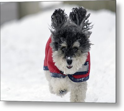 Snow Charge Metal Print by Keith Armstrong