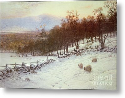 Snow Covered Fields With Sheep Metal Print by Joseph Farquharson