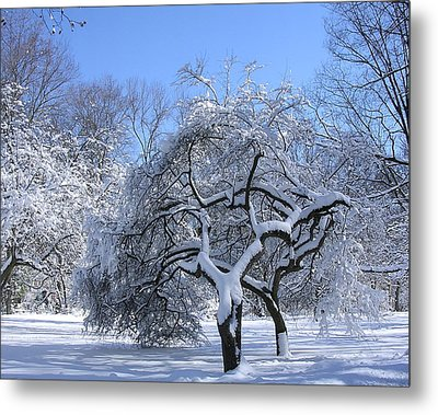 Metal Print featuring the photograph Snow-covered Sunlit Apple Trees by Byron Varvarigos