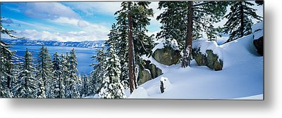 Snow Covered Trees On Mountainside Metal Print