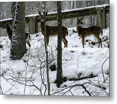 Snow Deer - Rock Creek Park Washington Dc Metal Print