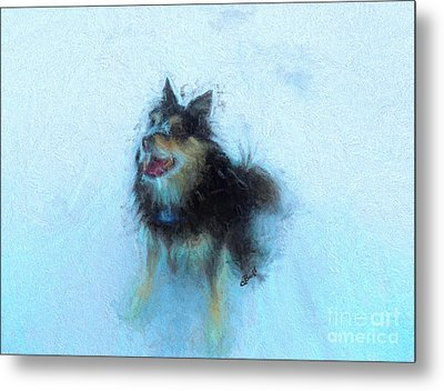 Snow Dog  Metal Print by Claire Bull