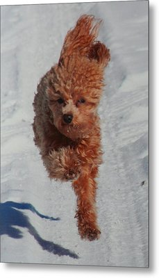 Snow Dog Metal Print by Diane Merkle