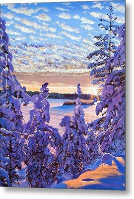Snow Draped Pines Metal Print
