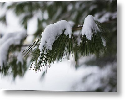 Metal Print featuring the photograph Snow Falling On The White Pines by Andrew Pacheco