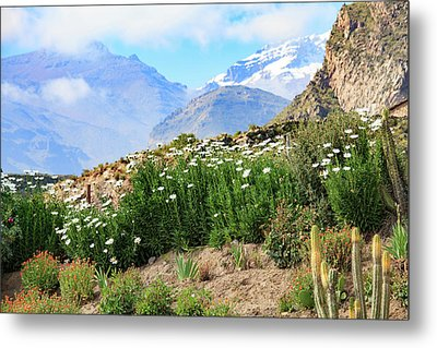 Metal Print featuring the photograph Snow In The Desert by David Chandler