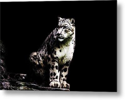 Snow Leopard Metal Print by Martin Newman