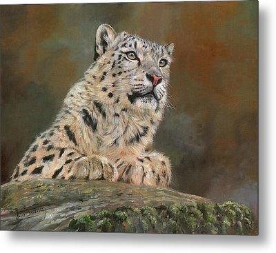 Snow Leopard On Rock Metal Print by David Stribbling