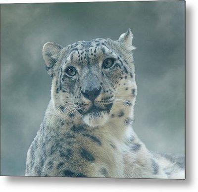 Metal Print featuring the photograph Snow Leopard Portrait by Sandy Keeton